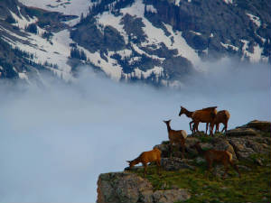 """elk in fog""...click to see more photography"